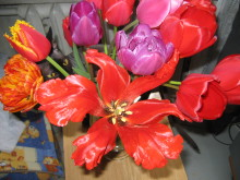 Тюльпаны 46rzgw-u8c