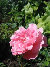 Мои любимые цветы- розы - Страница 2 46rzhp-i0g