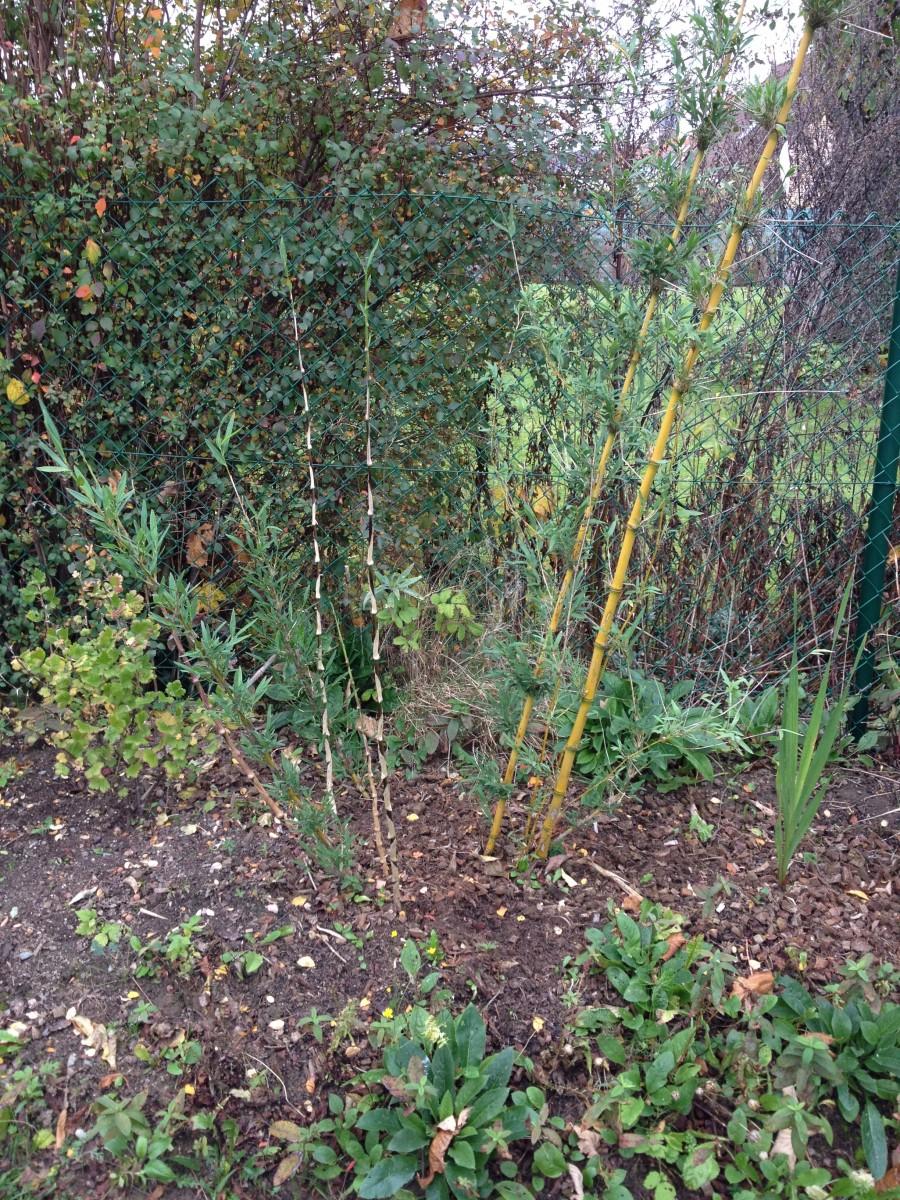 "Jardin ""La Palmeraie"" à Renaix (B) - Page 5 IMG_8096"