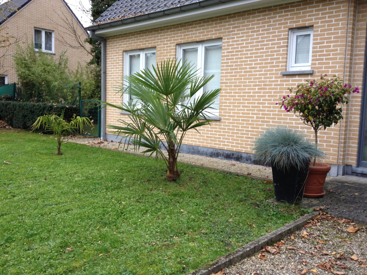 "Jardin ""La Palmeraie"" à Renaix (B) - Page 5 IMG_8103"