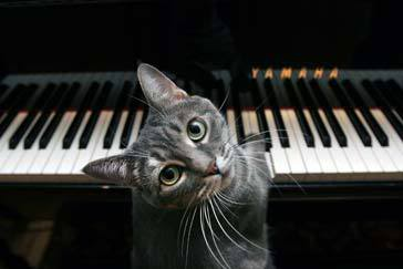 FREE Music sheets (beginners on up)  UPDATED Nov. 19, 2010 Pianocat