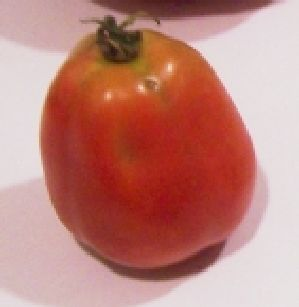 حفظ الخضروات و الفاكهة Tm%20paste%20tomato