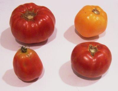 تجميد الخضروات والفواكه Tm%20tomatoe%20types
