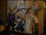 Время кукол № 6 Международная выставка авторских кукол и мишек Тедди в Санкт-Петербурге IOgP10506550Fg.th