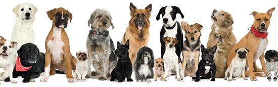 Фан-клуб любителей собак Many-dogs2