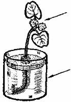 Как построить вертикальную грядку? Doc2fb_image_03000012