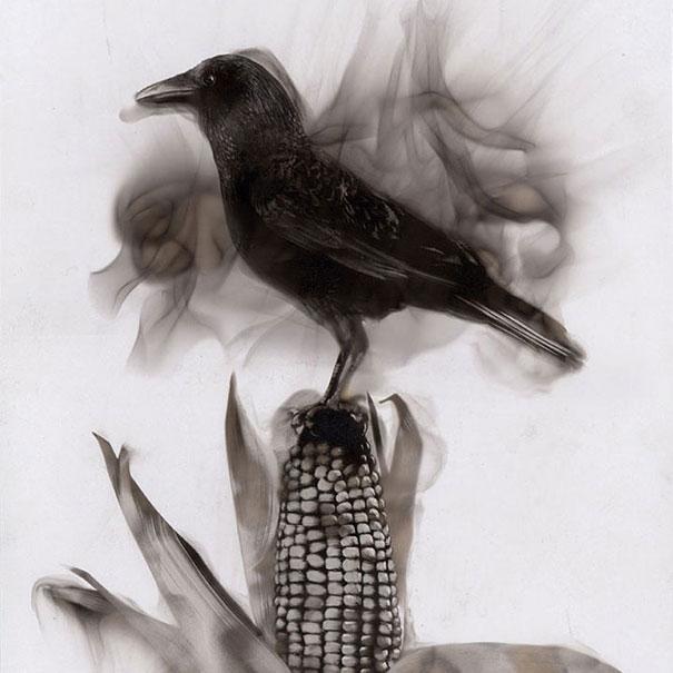 Pintura Con Fuego: Artista Dibuja Con Llamas Y Hollín Source-MhHh9qTfTy