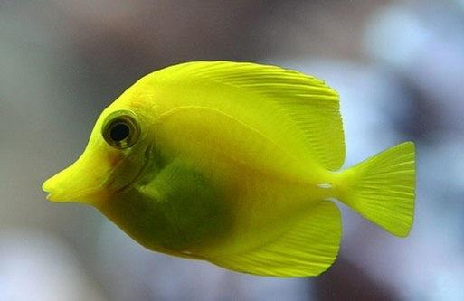 Рыбаку из Индонезии удалось поймать вымершую 80 миллионов лет назад рыбу 28233015
