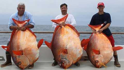 Рыбаки за день поймали трех невероятно редких рыб 37986009
