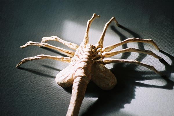 CANO Facehugger