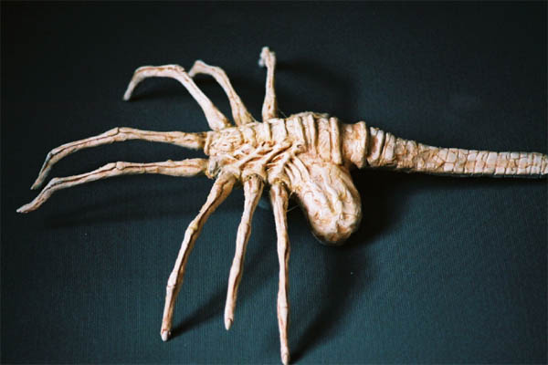 CANO Facehugger2