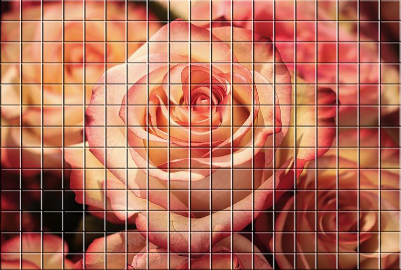 ATELIER  IMAGES de FAN ( Cuvée 2020) - Page 17 Rose