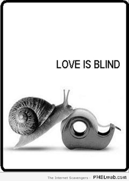 Quoi de neuf aujourd'hui ? - Page 6 7-love-is-blind-snail-humor