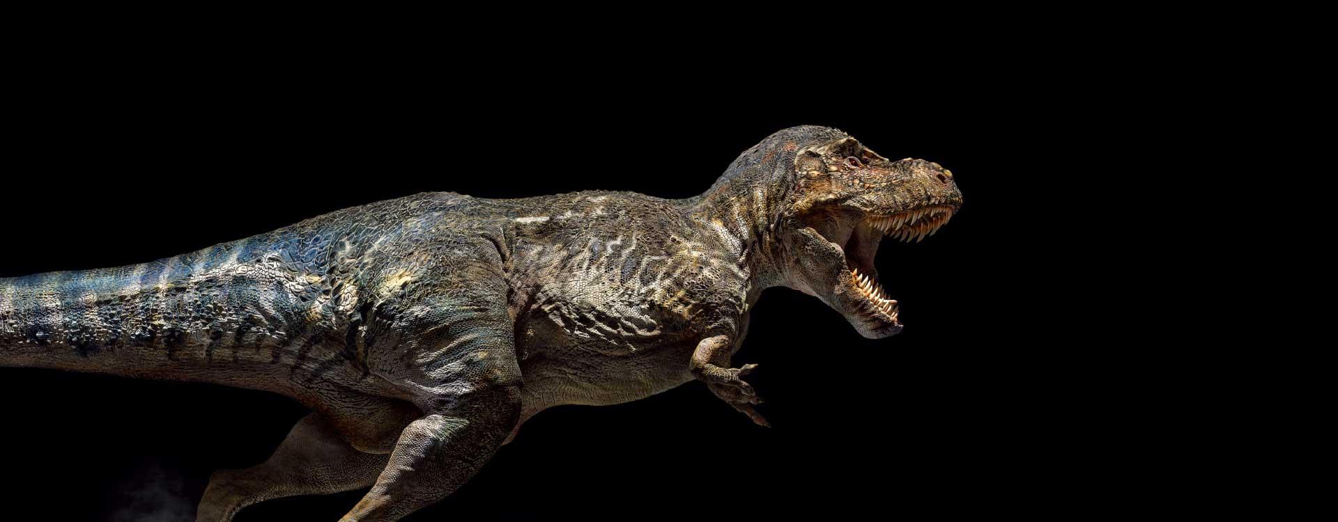 What's your favorite T. rex design? P20160811170917_50580