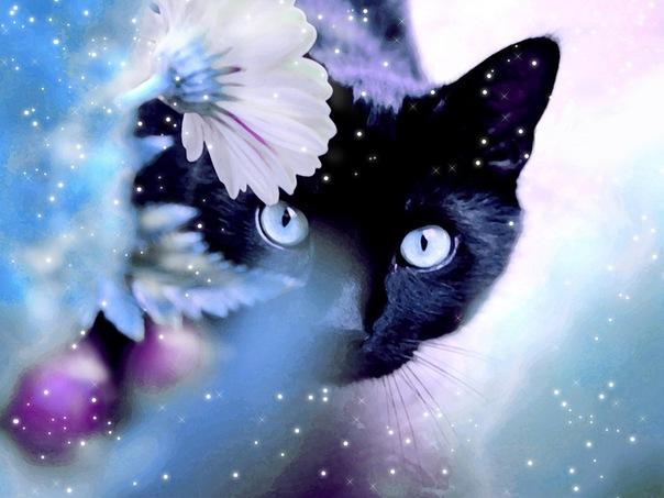 Все самые красивые кошки Мира 00412709