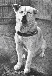 [Culture] Hachiko, chien fidèle Hachiko1