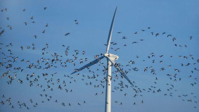 Von wegen Umweltfreundliche Energiegewinnung durch Solarkraftanlagen Windraeder-tiere-tot