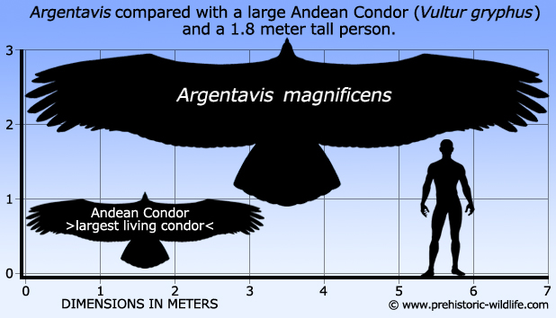 Dinosaurs and other Prehistoric Animals - Page 2 Argentavis-size