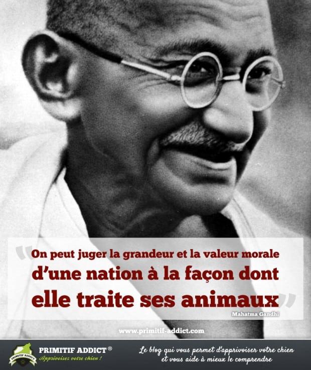 Citations qui font réfléchir Citation_Valeur_Nation_Animaux_Gandhi-620x737