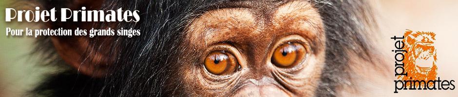 Projet Primates Entete
