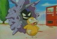 La folie pokémon a atteint son paroxysme  Psykokwak_vs_crustabri