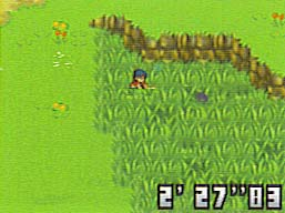 Pokemoni Salbatici Grass2