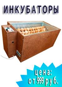 Инкубаторы от простых до автоматических. Вместимость: от 48 до 630 яиц!