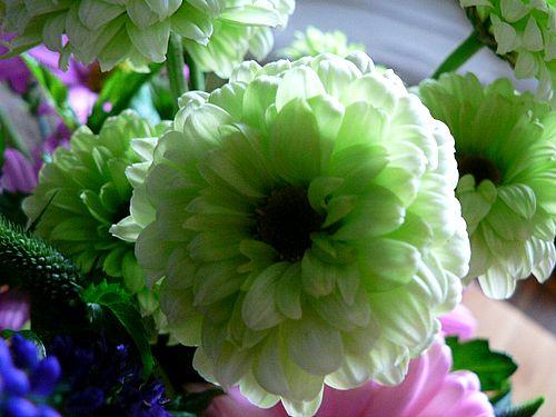 Postavi sliku i zatraži sledeću White-and-green-flower