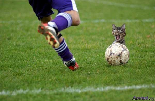 Klipovi,slike,ludosti i biseri sporta Soccer_Cat_Kick