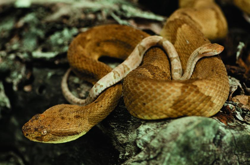 Sve zmije svijeta  - Page 10 Ostrvo_zmija2