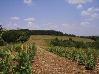 Put vina kroz istoriju Srbije Vinograd-sa-crkvom