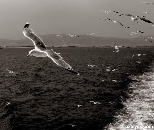 Crno-bele slike - Page 5 28