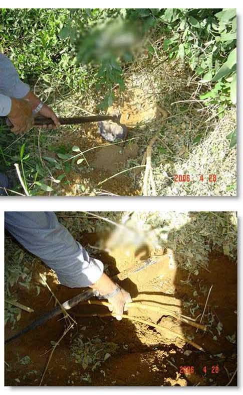 كيف يستخرج السواك؟ادخل لتعرف بالصور A0115a1839