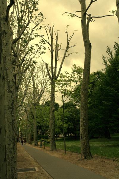 استمتعيـــــ Paris_trees