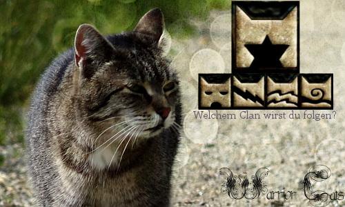 Der NebelClan sucht dich Warriorcatssks