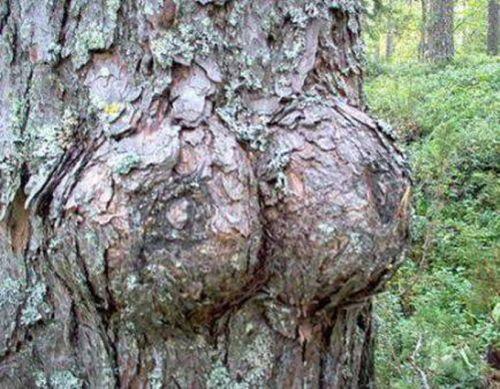 Maintenant je sais comment naissent les arbres ! .pornographie-bio-quat-rues_m