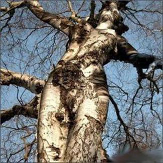 Maintenant je sais comment naissent les arbres ! Sexy-bio-blog-quat-rues