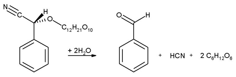 Palabras encadenadas - Página 2 Produccion-cianuro-benzaldehido-y-glucosa-descomposicion-amigdalina
