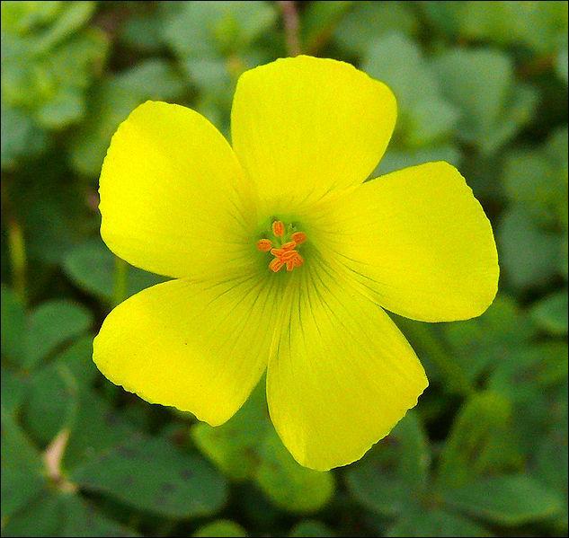 la fleur de Martin du 13 juin trouvée par Martine - Page 3 4_G55Qb
