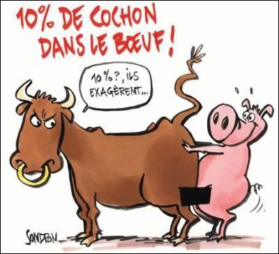 """Les """"Stupid Zèbres"""" c'est nous... - Page 2 15_ba13c"""