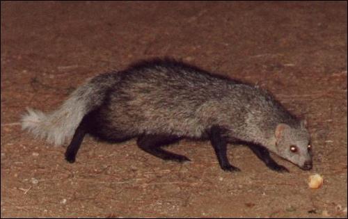 l'animal du petit loulou - 31 octobre trouvé par ginto et martin 7_YBcEI