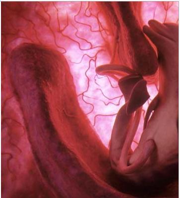 تصرفات الجنين داخل الرحم …….عالم من الأسرار  1179628240a11