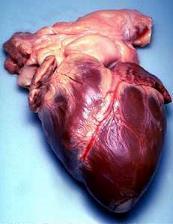 بحث رائع: قلوب يعقلون بها  1191166507humhrt2