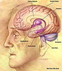 الادلة العقلية للقرآن الكريم في اثبات الخلق و التوحيد و البعث 1236715734200px-nia_human_brain_drawing