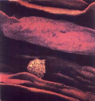 وصف التخلق البشري مرحلة النطفة 124527753342