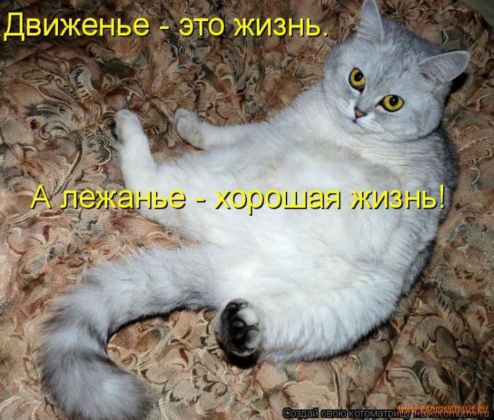 1327643771_luchshie-kotomatricy-nedeli-50-foto_10.jpg