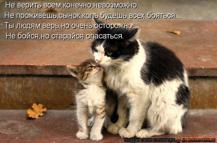 1327643795_luchshie-kotomatricy-nedeli-50-foto_22.jpg
