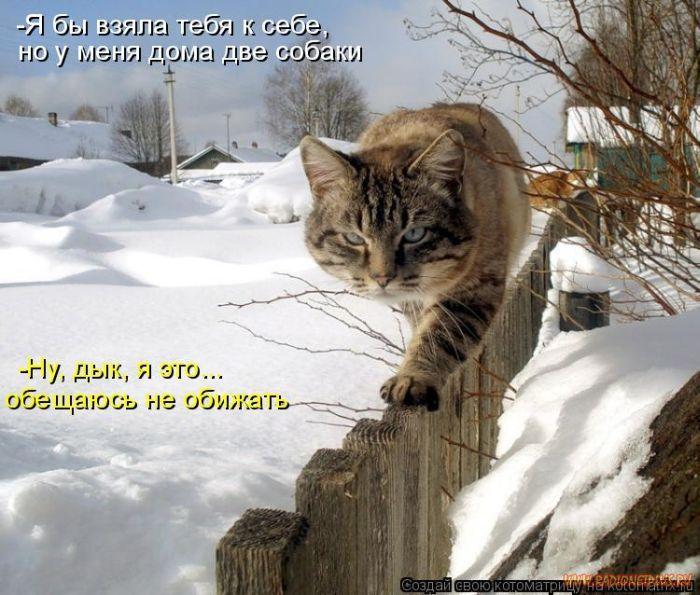 1327643849_luchshie-kotomatricy-nedeli-50-foto_13.jpg