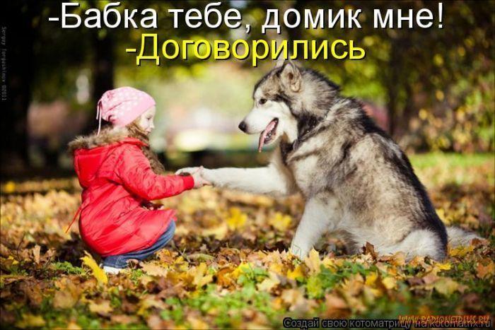 1327643855_luchshie-kotomatricy-nedeli-50-foto_38.jpg