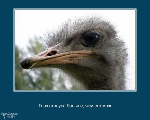 валтея - Мир животных. Интересные факты о животных. 1368844842_www.radionetplus.ru-1